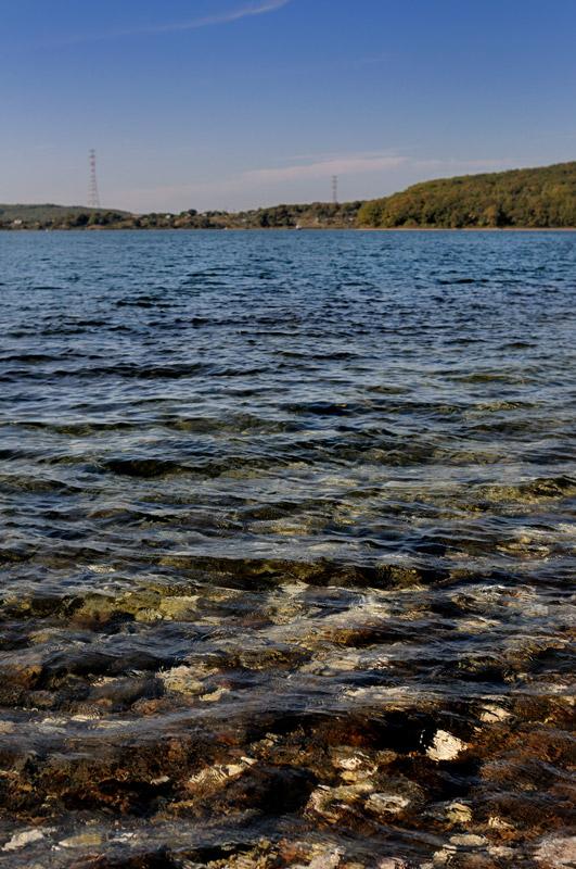 В прозрачной воде торчат все те же многочисленные устрицы.