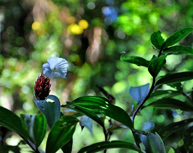 Восстановить организм после битвы с обжорством и излишествами помогут неспешные прогулки по окрестным лесам. Впрочем, не стоит портить зрение досточтимых читателей унылыми изображениями цветочков.
