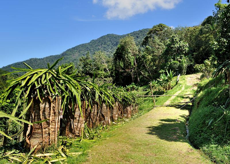 Длинной ухоженной спиралью вокруг холма тянутся невысокие колонны увенчаные какими-то, похожими на молочай, суккулентами.