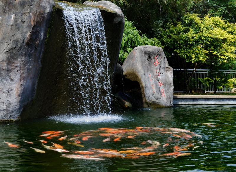 В местных храмах принято восторгаться обкуренными змеями, меня же воистину впечатлило маленькое, но необъяснимое чудо — карпы в пруду непрерывно кружат в рыбьем хороводе. Причем, насколько хватило терпения для наблюдений, просветленные               рыбы так и не прекратили эту странную медитацию.