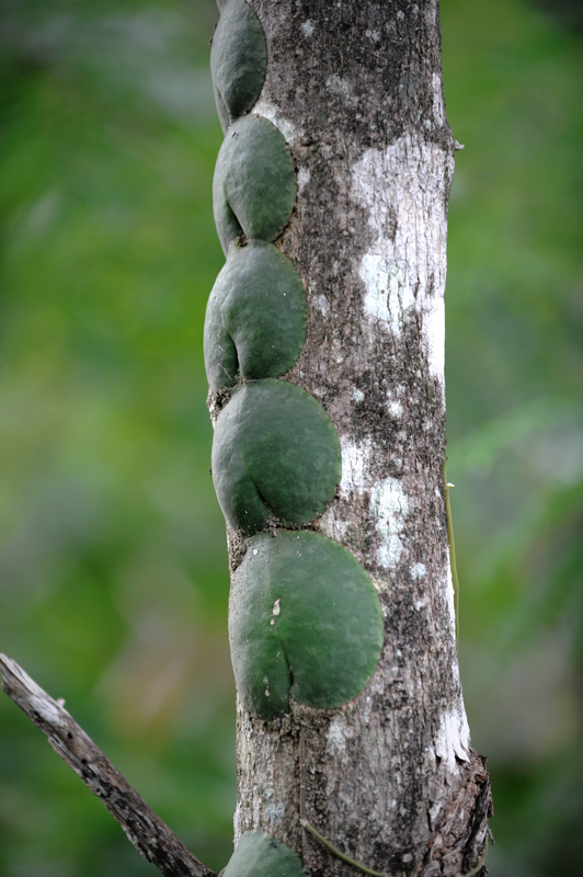 Не все объекты стремительно убегают в кусты, некоторые крепко приросли к деревьям и согласны позировать неподвижно.