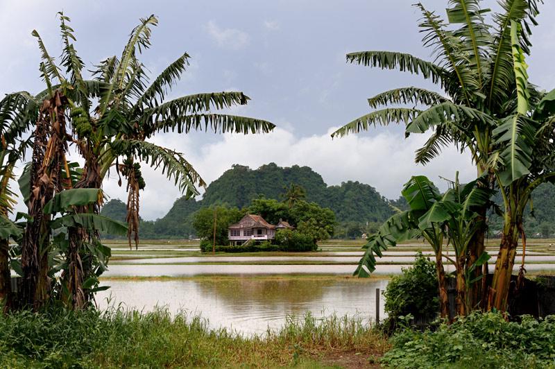 Стоявшие посреди полей дома превратились в острова, окруженные клетчатыми рисовыми озерами.