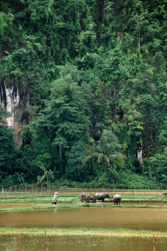 Окрестные холмы характерны совершенно отвесными вертикальными склонами, словно специально сделанные недоступными, чтобы аборигены не             вздумали вылезать из своего болота на сухие возвышенности.