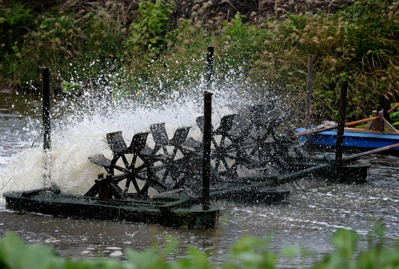 Поэтому, помимо риса, прямо на полях популярно разведение рыбы и креветок. Для аэрации креветочного хозяйства используются вот             такие механические мешалки.