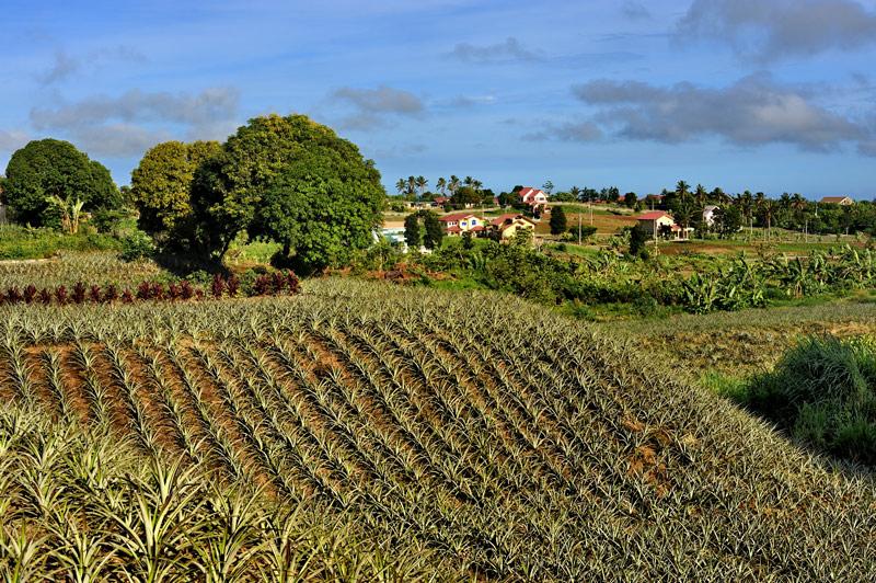 Все сколь-нибудь значимые природные объекты находятся на значительном удалении от города. Стандартный набор из островов, водопадов, вулканов и живописных ананасовых плантаций вдоль дорог.