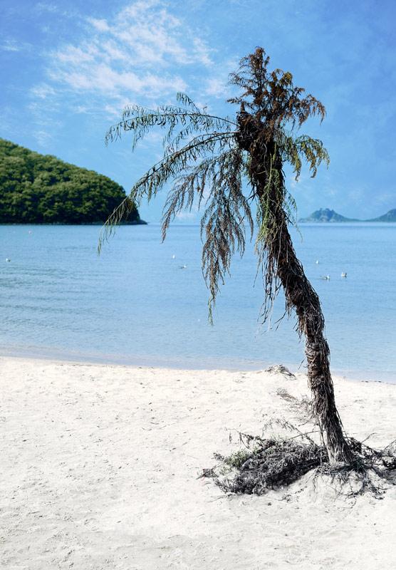 Корявые творения природы дополнены гербариями, оставшимися на пляжах от отдыхавших в Андреевке граждан. Пальмы из полыни, шашлыки из собачатины... Зато песок и вода настоящие.
