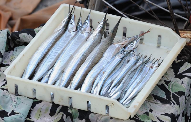Эта, очень похожая на саргана, рыба — полурыл японский (Hyporhamphus sajori). Не стал расстраивать корейцев неполиткоректным термином и на вопрос о ее русском названии ответил: «Сарган».