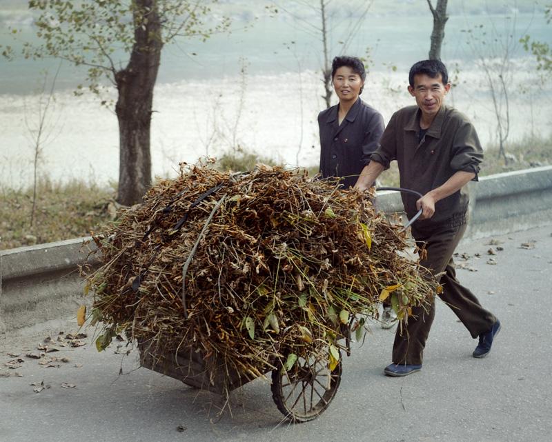 Собранную траву и листья не сжигают. Хотя сомневаюсь, что кто-то в городской квартире держит корову или кроликов.