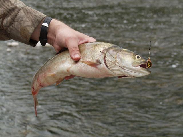 Рыба есть. Она не может не есть.