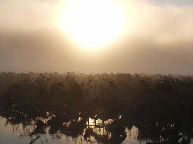 Сальвадор Дали лопнет от зависти. Совершенно нереальная картина. Туманный рассвет в лотосах.