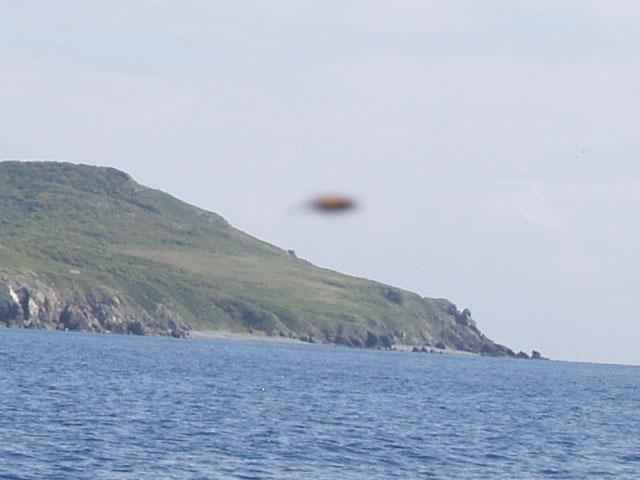 Вот что обнаружил на одной из фотографий при большом увеличении. Думаете НЛО? А вот хрен. Жужелица это полосатая. У пчел был сезон гона. Что они там опыляют над водной гладью, остается загадкой.