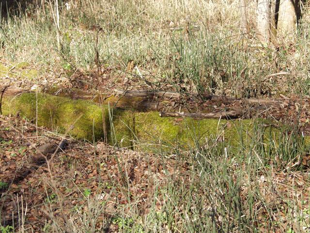 Из зеленых насаждений видны лишь елки, мох да хвощи.