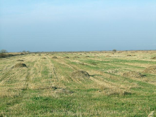 Рисовые чеки в Хорольском районе. На берегу озера Ханка. Температура +11 цельсиевых градусов, что для середины ноября очень радостно.
