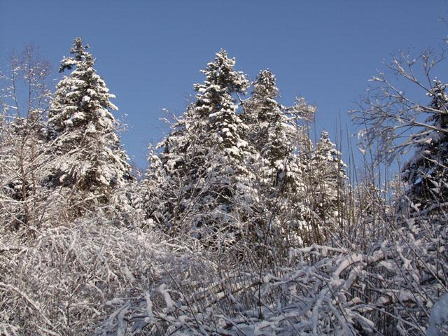 Бодрые елки и всякие разные красоты.