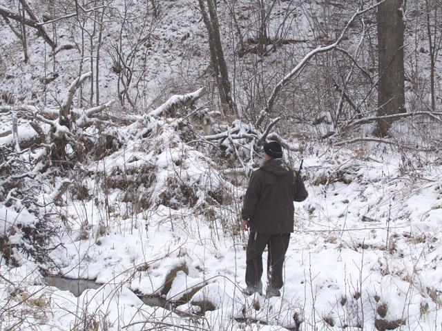 Однако тропы весьма завалены елкапалками. Ночью выпал свежий снег, присыпав царящее в лесу безобразие.