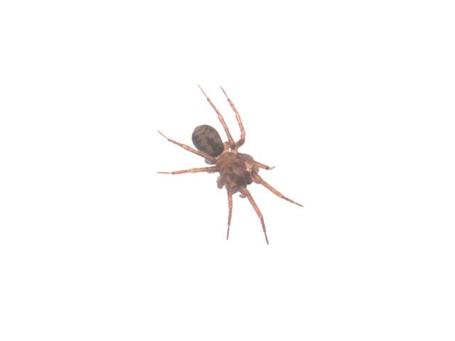 А это я узрел ползущего по снегу микроскопического паука. Вот уж не ожидал встретить зимой в лесу насекомых. Посему макро-объектив оставил дома. Ну вот паук так фигово получился.