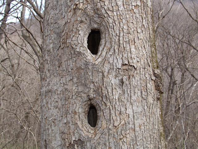 Дуплет - это деревяшковое двоедуплие.