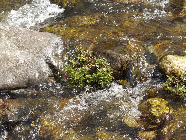 А в воде всяка пакость зеленая цветет и пахнет.