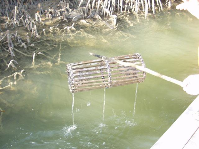 Как сплести морду для ловли рыбы своими руками