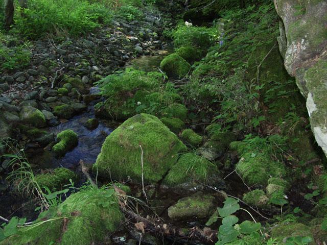 Августовская жара не проникает к заросшим речным берегам.