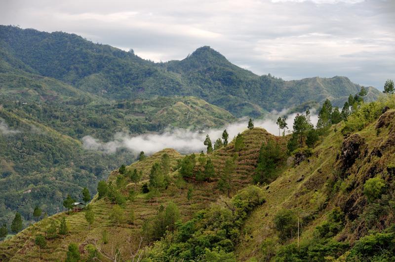 Склоны гор изгрызены террасами культурных плантаций, на которых местные крестьяне, в промежутках между пышными похоронами и свадьбами, выращивают закусь для этих празднеств.