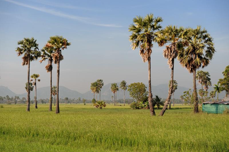 Ближе к морю пейзажи становятся более благообразными, пыльные обочины сменяются оросительными каналами, из земли местами торчат бодрые пучки пальм.
