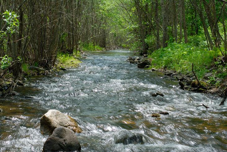 Воды нынче много. Везде булькают ручьи, ручейки и всяческие водоемоболота. Местами дороги стали новыми руслами рек.