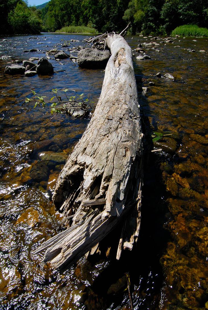 Обул панамку и тапочки, пошел фотографировать речные красоты. Там бревно валяется красивое, тут какая-то срань из камня растет... Под берегом в омуте погрузился по самые ноздри, из воды торчит лишь панамка и фотоаппарат. А с берега               мужик с удочкой что-то сосредоточенно высматривает в воде. Я сократив дистанцию до приличествующего для беседы расстояния, радостно хрюкнул из воды. Внезапно узрев прямо под собой большую голую тушу в панамке и с фотоаппаратом, что-то               верещащую из ледяной воды, мужик с перепугу чуть не дроболызнулся с обрыва. Посмотрев на меня выпученными глазами какающего ежика, он невежливо ломанулся куда-то в кусты. Наверное потом вечером у костра красочно рассказывал про речные               ужасы в виде сидящих под корягами голых психов.