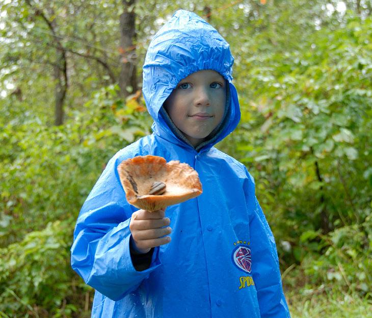 Бодрый дождь активизировал бурное произрастание грибов. Лес в считанные часы ошляпился разнообразными мухоморами. Возбудившись на запах грибов, по тропинкам важно ползали аппетитные полосатые улитки.