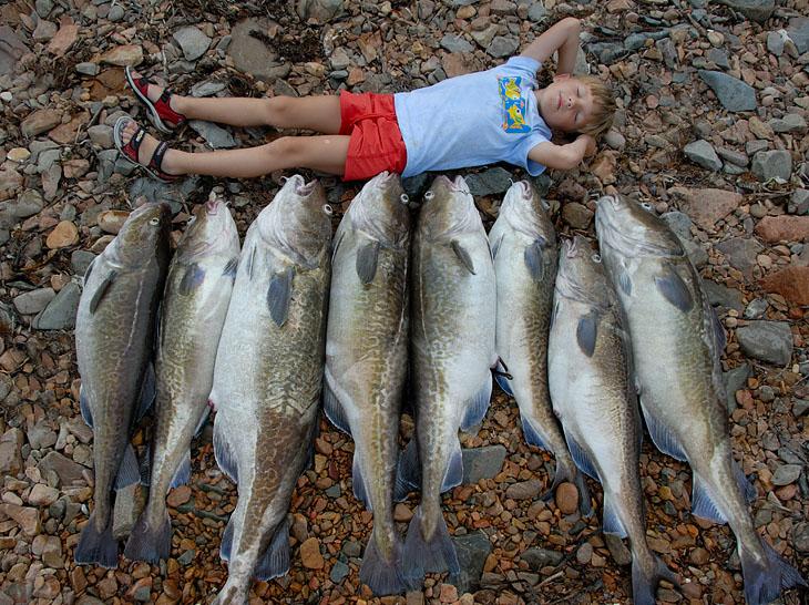 А это подтянулся коллектив вернувшийся с рыбалки на Gadus morhua macrocephlus. Привезли немного рыбешек на уху.