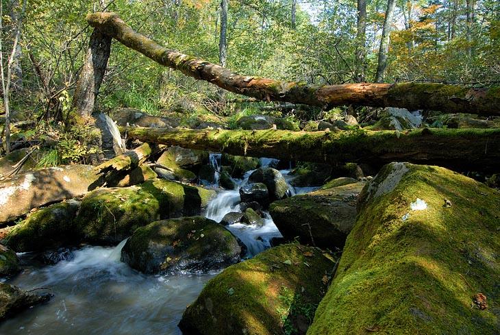 Сам ручей живописно захламлен замшелыми камнями и всяческими бревнами.