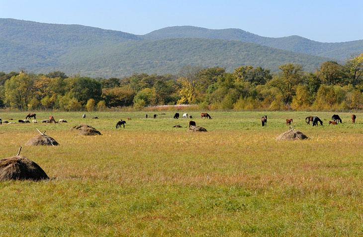 Путь наш лежал через живописные поля и прочие болота. В воздухе тучами носились божьи коровки, всех цветов и размеров. Повизгивала от счастья увязавшаяся с нами собака. В жаркой дымке проступали желтеющие сопки.