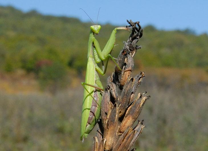 Не забывая впрочем фотографировать всякие встреченные по дороге любопытные объекты. Объекты таращили на нас свои зеленые глазищи, с сожалением размышляя, что эти жирные двуногие мухи им пожалуй не по зубам.
