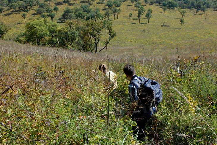 Кажущиеся со стороны гладкими склоны, на самом деле покрыты густоцеплятельной травой в человеческий рост. Тропы основательно заросли, посему продираться пришлось с боем и прочим матом.