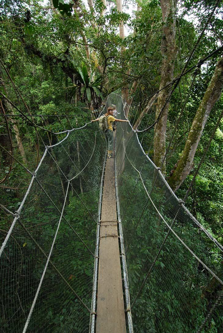 Еще одна интересная достопримечательность, это всевозможные подвесные мосты, подвешенные где нужно и не нужно. Они тянутся на               сорокаметровой высоте в кронах деревьев тропического леса. Колышутся над реками, ущельями и автомобильными дорогами. Соединяют собой               части местных мегадомов - лонгхаузов. Это вот наиболее свежий и симпатичный экземпляр моста.