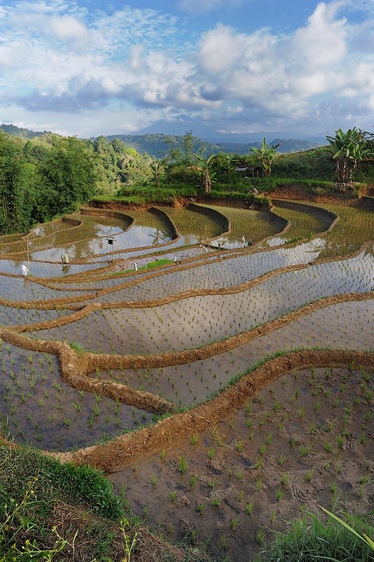 Посадки риса формируют фантастический ландшафт горных склонов, а процесс его выращивания с незапамятных времен стал смыслом               жизни азиатских крестьян. В буквальном смысле, обожествление риса отразилось и на кулинарных традициях. До сих пор чаще всего рис вам               подадут в отдельной плошке, не соленый и без приправ. Чтобы не опошлять истинный вкус благородного риса смешением с другим продуктами.