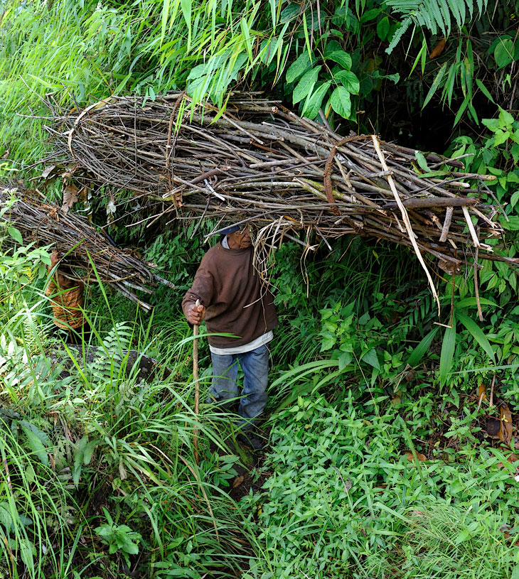 Но мы не ищем легких путей. Спускаться к озеру решили напрямик по одной из поросших зеленью джунглей стенок кратера. Под               мглистым покровом бурной растительности петляет протоптанная местными жителями тропа, по которой, словно огромные двуногие муравьи,               тащат они урожай сухих палок.