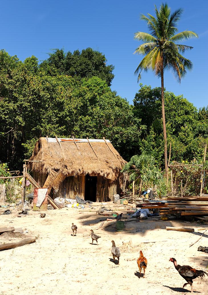 Если верить путеводителю, плешивые куры, как и другая домашняя птица, живут тут исключительно за счет охоты и побирательства.             Кормить собственную еду в Камбодже не принято.