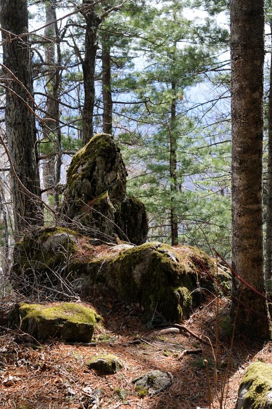 Устланный толстым ковром из опавшей хвои подъем по хребту украшен мохнатыми изваяниями лесных чудовищ. Причудливые камни             дожидаются своего первооткрывателя с воспаленным воображением, который придумает очередную легенду про «чудесную гору», влекущую             несметные толпы таких же недалеких и все загаживающих граждан.