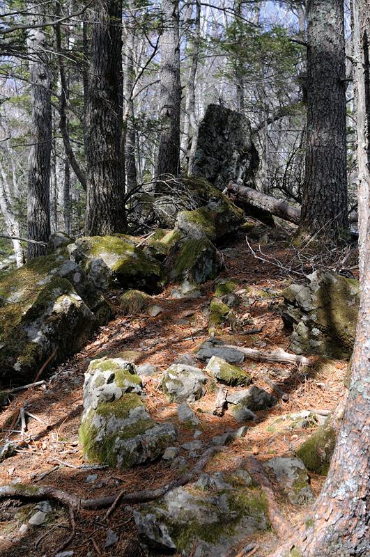 Уже сейчас любопытные бурундуки столбиками торчат вдоль нашего пути, а на каменных осыпях суетливо спасаются какие-то неприлично             жирные бесхвостые грызуны.